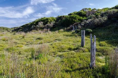 old fence posts next to inland walking track