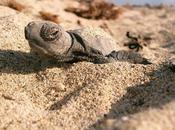 Greece Turtles Conservation Project