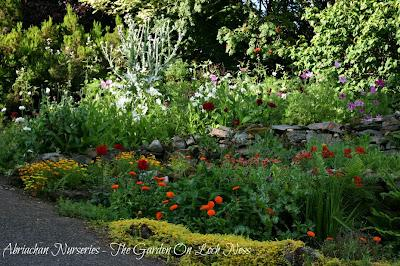 A freshly planted border of annuals