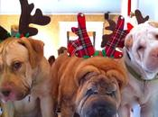 Happy Holidays from Bridget Beari Dogs Jaegar,