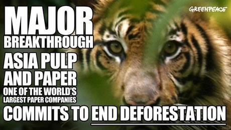 TIMELINE: How you persuaded Asia Pulp & Paper to stop cutting down Indonesia's rainforests