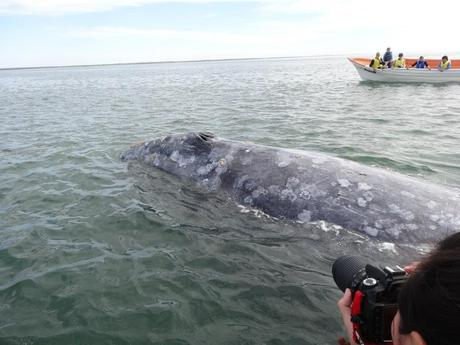 The 4 Most Surprising Things About Whale Watching in Baja, Mexico