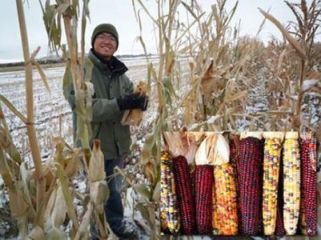 Can pop corn, seed corn, or sweet corn be altruistic? This is a serious question.