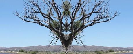 Finding Symmetry