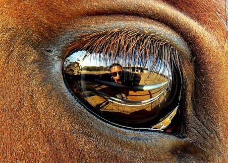 the biggest fear - my biggest fear is going blind. photo - eye reflection