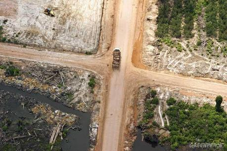 Asia Pulp & Paper finally give in to Greenpeace Pressure