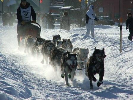 1000-Mile Long Yukon Quest Sled Dog Race Underway!