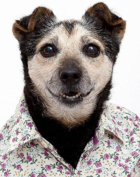 Exquisite DOG Portraits that even your Mom would Love!