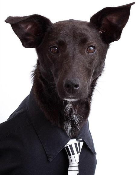 GQ DOG Portraits Taken on a Dining Room Table!