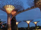 Supertree Grove Night Singapore