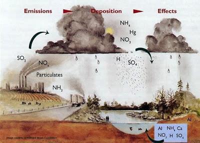 The fruition of the USA Acid Rain Program