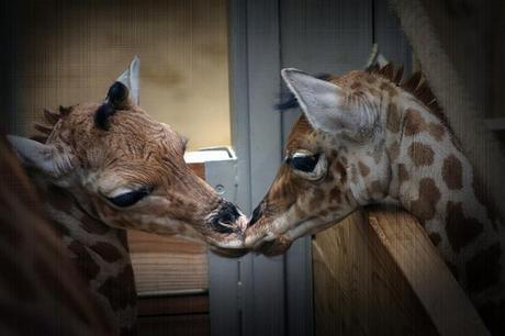 Love in the Animal Kingdom