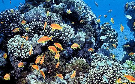 Most Impressive Coral Reefs