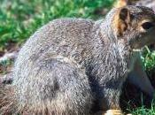 Squirrel Hunting Event Upstate York Draws Protests