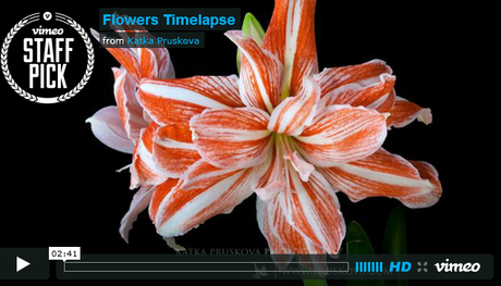 timelpase of flowers