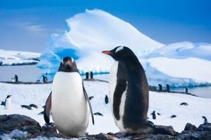 Antarctica - the life of the penguins near their natural habitat