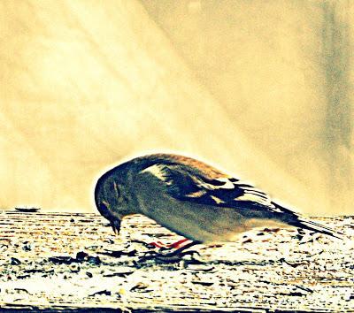 Still More Birds