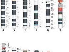 Genes That Make You,