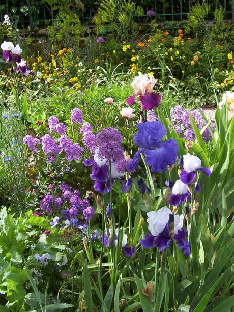 allium, phlox and irises in Claude Monet's Giverny house garden
