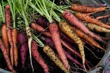 Rainbow mix carrots