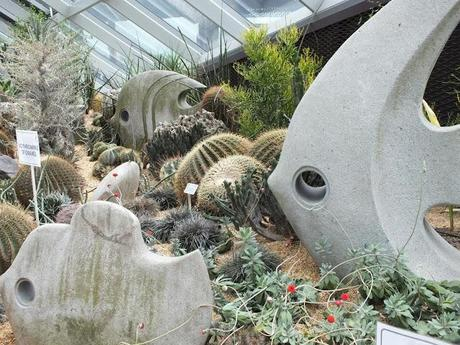 Succulents in the Dome