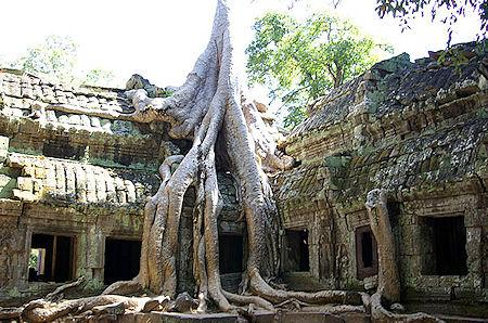 Giant Trees At The Cambodian Temple Of Ta Prohm