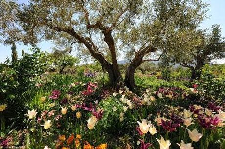 Grand prize winner of the 2012 Royal Horticultural Society Competition, Josie Eliasr's Iris garden at Plantas Distintas in Marnes, Spain.