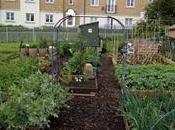 Planting Plan 2013