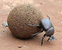 The Dung Beetle Award goes to...