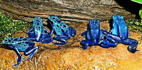 Most Poisonous Frogs On The Planet