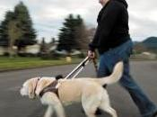 Woman Dual Bond with Guide Dog, Friend