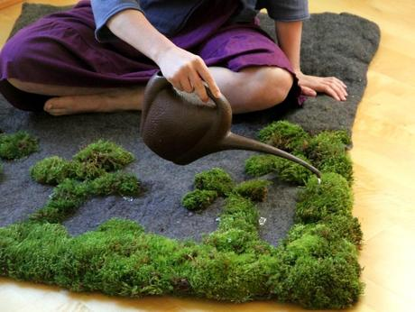 Growing moss on your rug?
