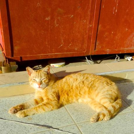 Cats of Course!/ Morocco