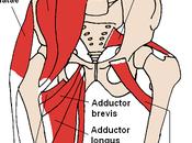 Anatomy: External Rotation
