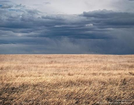 a dramatic stormy sky over Colorado's high plains and two lone birds flying along the horizon