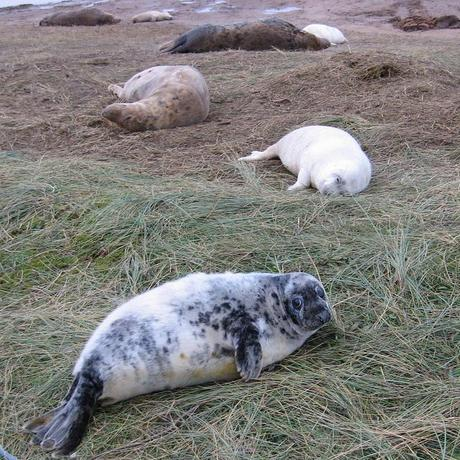 Stranded seal pups return to the wild