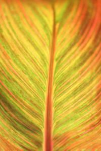 Texture X : Radiant Leaf