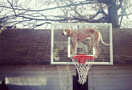 See the Statuesque DOG that Defies the Law of Gravity!