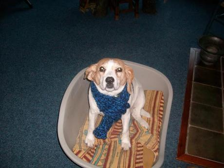 DIY Dog Scarf