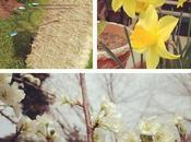 Spring Sacramento Story