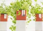 Evergreen Herb Home