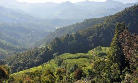 Unwinding amidst shola of South India's Highest Peak - Anamudi