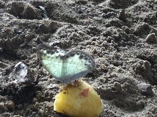 Kinshasa: Butterfly Season