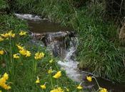 Weeds Waistlines, Signs Spring!