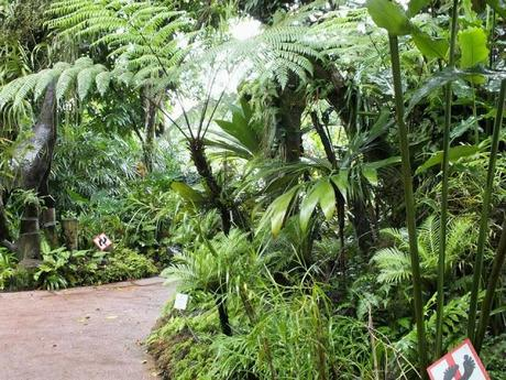 Escape in the Jungle at Singapore Botanic Gardens