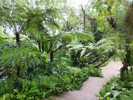 Escape in the Jungle at Singapore Botanic Gardens