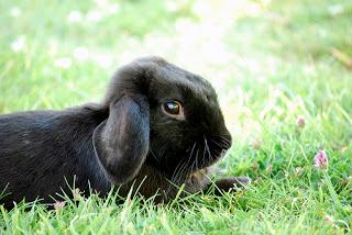 #Bringing #Home the #Bunny: #New #Rabbit #Owner #Shopping #List