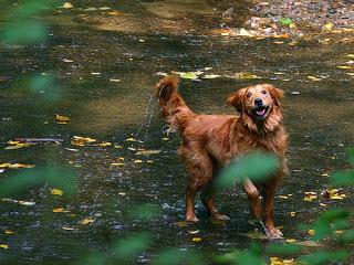 #Photos: #Wet #Paws & #Water #Logged #Dogs
