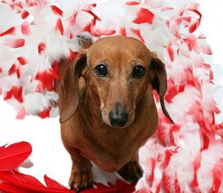 valentines day chocolate deadly for dogs