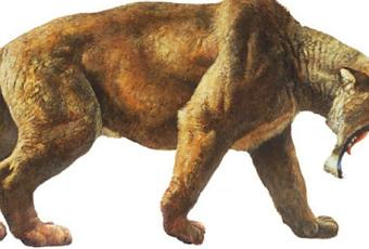 New Sabertooth Tiger Fossil Found Paperblog